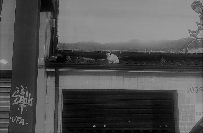 gato no telhado 2