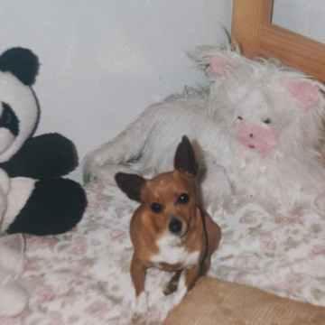Imagem de capa. Álbum de família. Cachorro. Autoetnografia. Fotografia de arquivo.