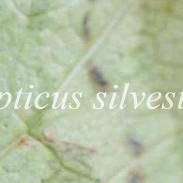 Imagem de capa. Arte-educação. Hapticus Silvestris. Flávia Arruda. Rodrigo Hipólito.